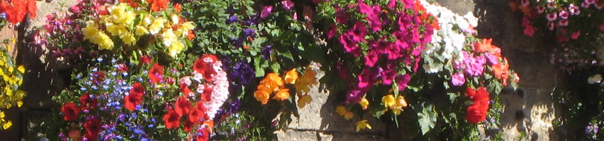 Otley in Bloom